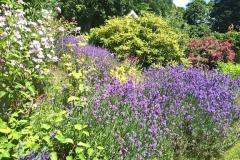 blandat-blommor